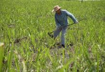 Exhorta la CNDH a revisar los centros de trabajo agrícola