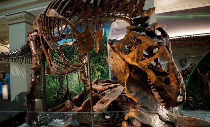 Museo de Washington mostrará un esqueleto auténtico de un Tyrannosaurus rex