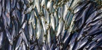 Calentamiento global reducirá fauna marina, dice estudio