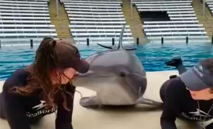 VIDEO: Delfín besucón se hace viral en redes sociales