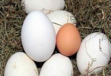 Huevos comestibles que no son de gallina