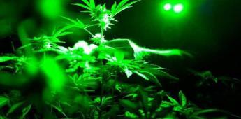 Descubren evidencias de uso de marihuana en antigüedad