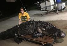 Un camión choca con un caimán de 3.6 metros que cruzaba autopista de Florida