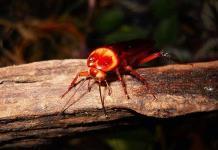 Cómo evitar la infestación de cucarachas