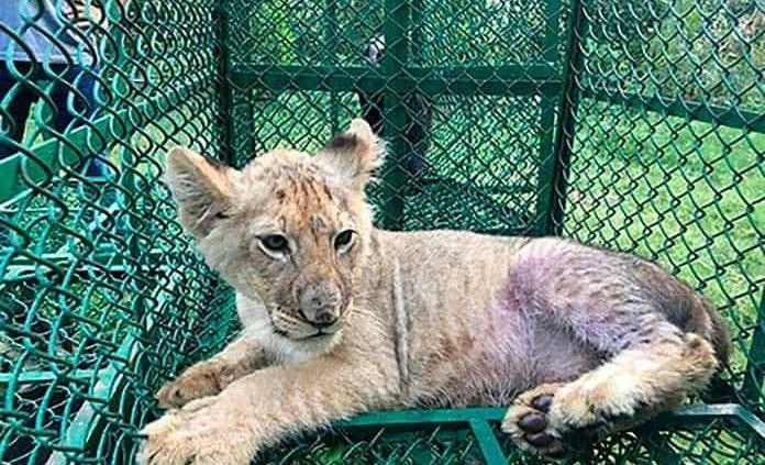 Rescatan miles de animales salvajes