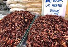 Los insectos comestibles abren paso a la fabricación de nuevas harinas
