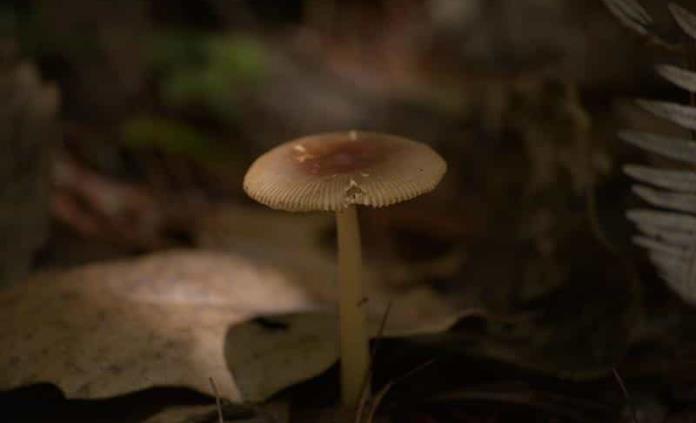 Producir cuero con hongos, un reto posible, sostenible y renovable