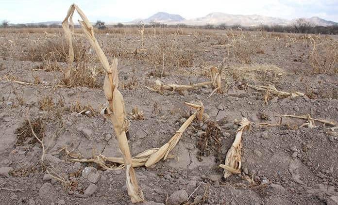La Huasteca, azotada por sequía severa