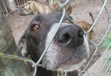 Denuncia Prolean: sacrifican canes sin cumplir protocolos