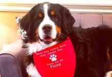 Perra de una funeraria de Brooklyn es la buena ciudadana canina 1 millón
