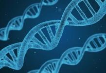 Identifican mecanismo que repara daños en el ADN por algunas quimioterapias