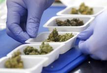 Con todo y reforma legal, habrá mucha gente que consuma marihuana de manera clandestina: Leal