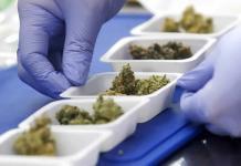 El consumo de marihuana puede reducir las posibilidades de un embarazo