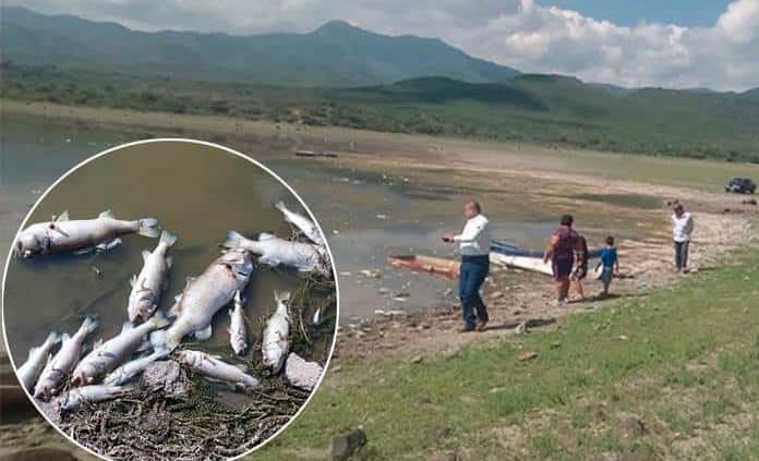 Mueren cientos de peces en presa de San Diego