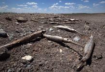 Huasteca sufre sequía récord