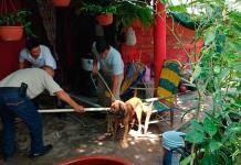 Cada dos días hay un ataque de perro en la Huasteca norte