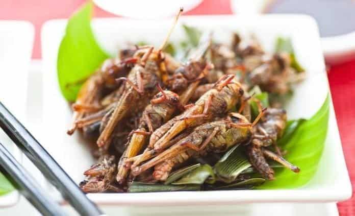 Consumo desmedido amenaza diversidad de insectos comestibles en México
