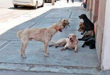 Atraviesan a perrito con flecha en Culiacán, Sinaloa