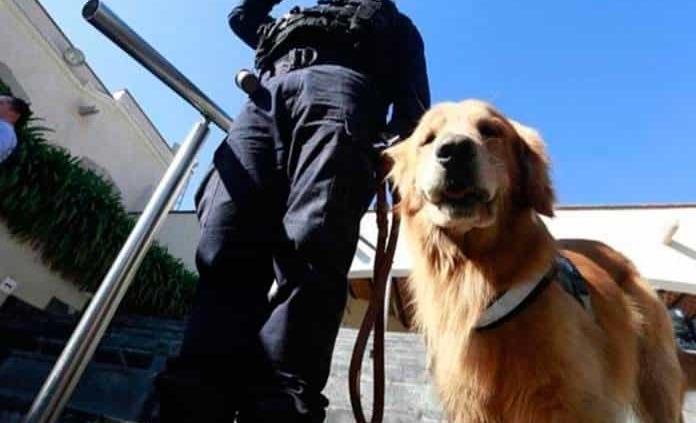 Con nueve agentes caninos combate al hampa la Policía de Rioverde