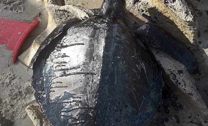 Resultado de imagen para Más de cien toneladas de petróleo han sido retiradas en costas Brasil
