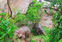 ¿Son los humanos culpables de la tragedia de los once elefantes de Tailandia?