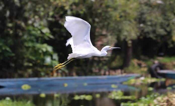 SL, sede de ponencias en Manejo de Fauna