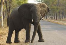 El tiempo se agota para evitar la sexta extinción masiva