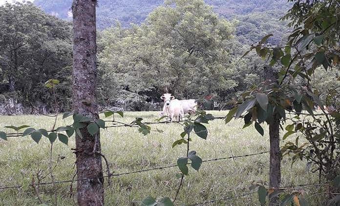 Preocupa baja en el precio del ganado