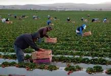 Más de 34 millones de mexicanos trabaja sin acceso a seguridad social: Observatorio de Trabajo Digno