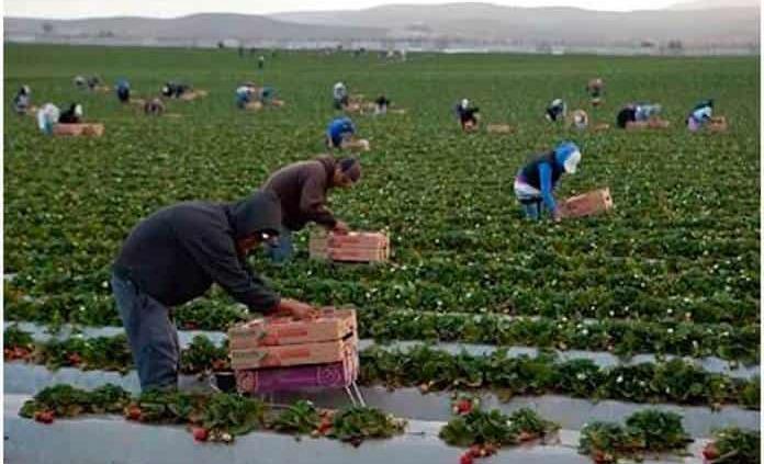 Desdeñan empleo en el campo
