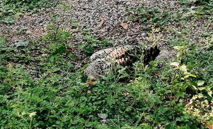 Matazón de perros,gatos y gallinas en colonia San Rafael