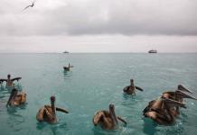 Islas Galápagos, acechadas por los pesqueros