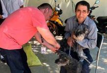 Buscan controlar sobrepoblación de perros callejeros