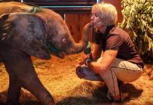 Elefanta albina de cuatro meses se rehabilita tras caer a trampa (FOTOS)