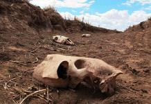 Preparan las medidas en el campo por sequía extendida