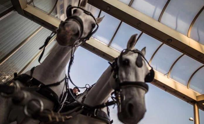 Roma prohibirá los coches de caballos con temperaturas de más de 30 grados