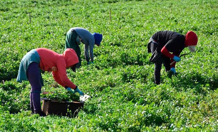 México, bajo la lupa de EU por trabajo infantil