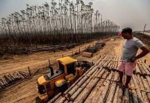 Alertas de deforestación en la Amazonía brasileña registran récord en mayo