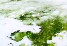 Calentamiento global provoca nieve verde en la Antártida