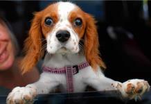 Cinco consejos para evitar que el ruido altere a tu perro