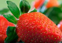 Razones para comer fresas