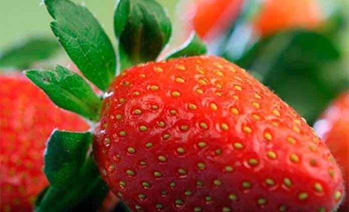 Conoce cómo lavar y desinfectar las fresas de la manera correcta