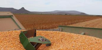 Kellogg busca cubrir su demanda de maíz amarillo con agricultores mexicanos