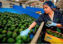 Crece 6.4% exportación del agro y ganadera