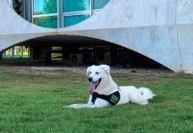 El perro adoptado por la primera dama de Brasil sólo pasó 12 días en Palacio
