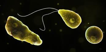 Florida confirma nuevo caso de la ameba comecerebros