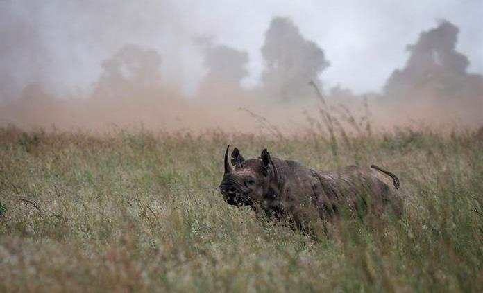 La caza furtiva de rinocerontes cae un 53 % en Sudáfrica por el coronavirus