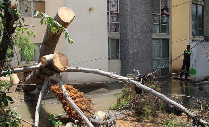 Caída de árbol en la Av. Morales Saucito daña drenaje y cables