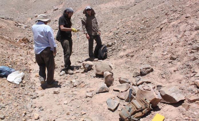 Loros momificados revelan su comercio en el antiguo desierto de Atacama