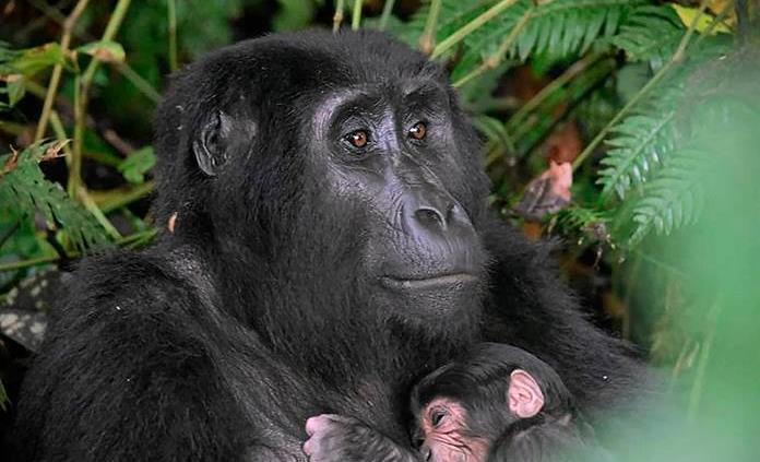 WWF advierte que la fauna vertebrada se ha reducido un 68% en medio siglo